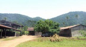 Au cœur de la forêt guinéenne, les trésors du Ziama